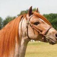 Apocalypse Horse